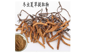 What are the effects of cordyceps sinensis extract?cid=6