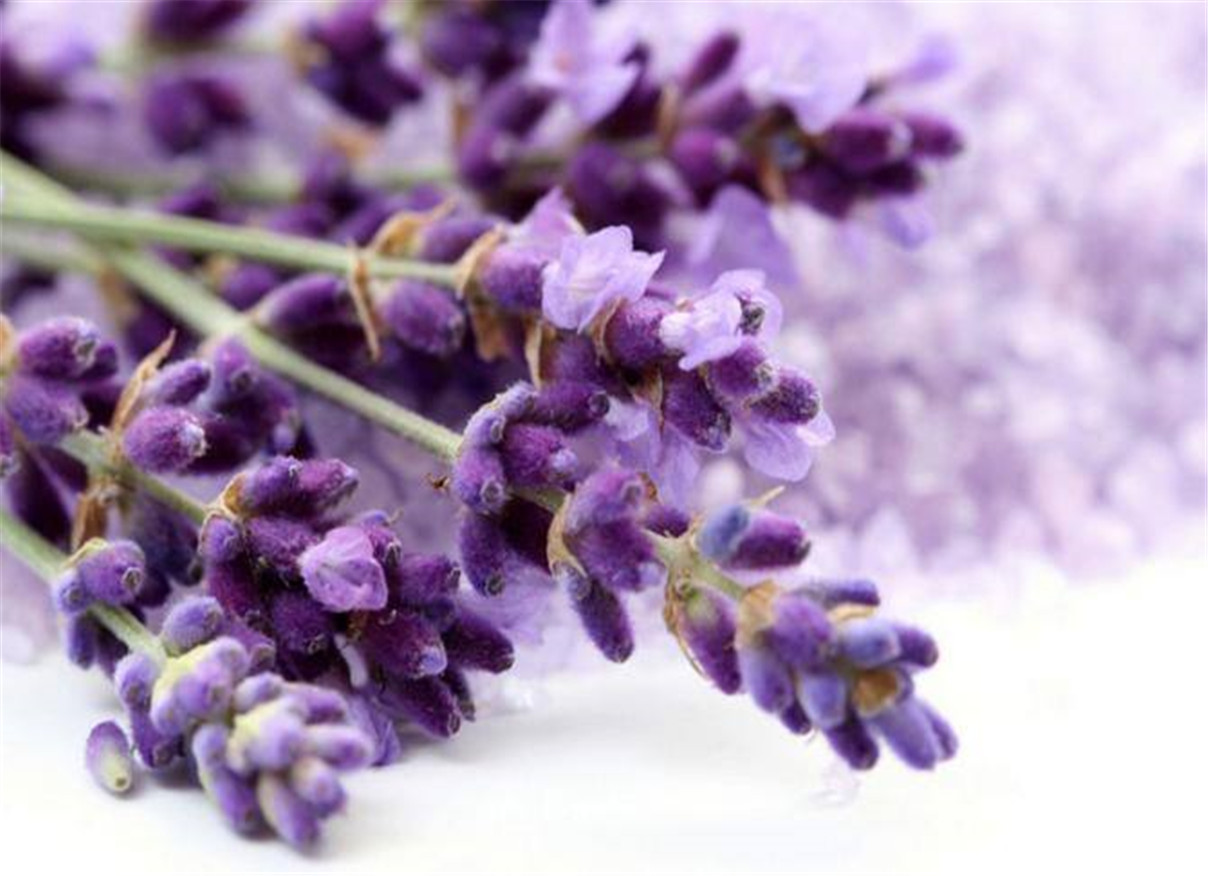 Lavandula Angustifolia Extract Liquid